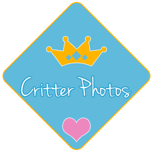 Pet and Critter Photos