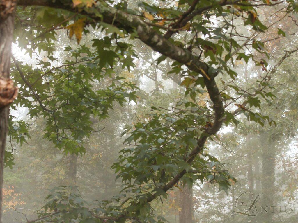 Foggy Morning 3