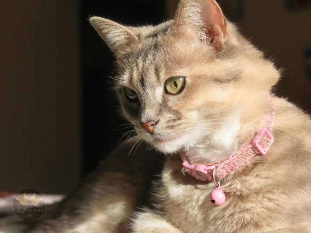 Cat Concern